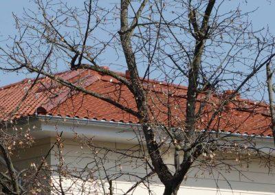 dachbau-hase-refrenzen-seniorenheim-beeskow (5)